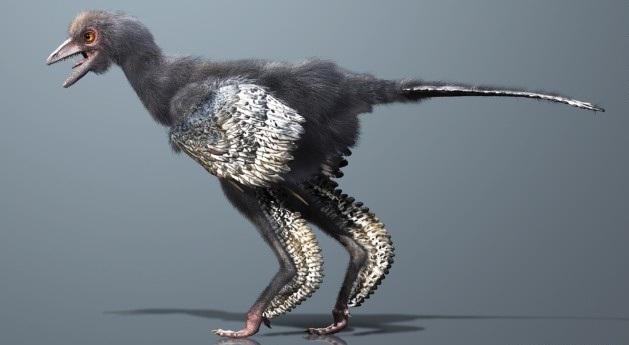 ave primitiva