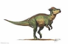 pachycephalosaurio