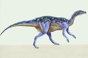 camptosaurio