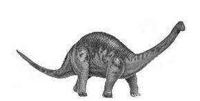 campylodoniscus