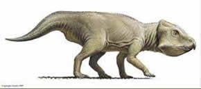 notoceratops